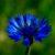 Rozrastanie się i rozwój roślin cz. 5