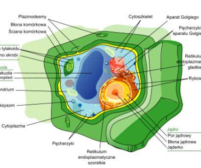 Komórka cz. 4