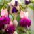 Rozrastanie się i rozwój roślin cz. 2