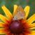 Rozrastanie się i rozwój roślin cz. 4