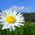 Ruchy liści i kwiatów cz. 7