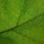 Ruchy liści i kwiatów cz. 4