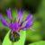 Rozrastanie się i rozwój roślin cz. 1